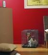 Savic  / Савик Клетка для транспортировки собак ( №1, №2)